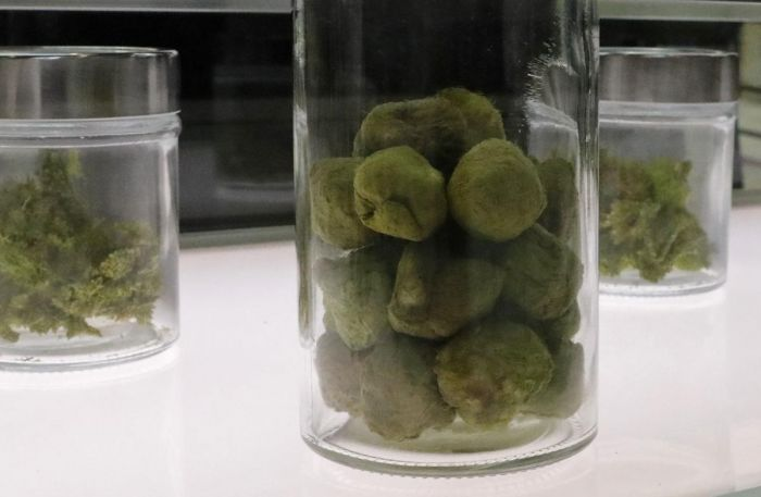 a container of packed marijauana