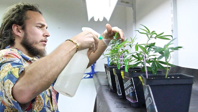 Palm Springs City Council approves new fee schedule for cannabis business violations