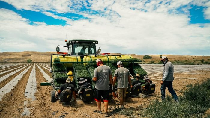 hemp farmers and tractor on a field