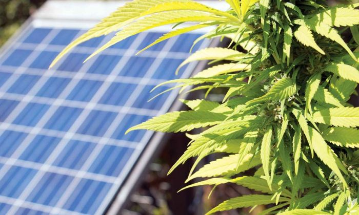 The Environmental Impact of Cannabis Cultivation