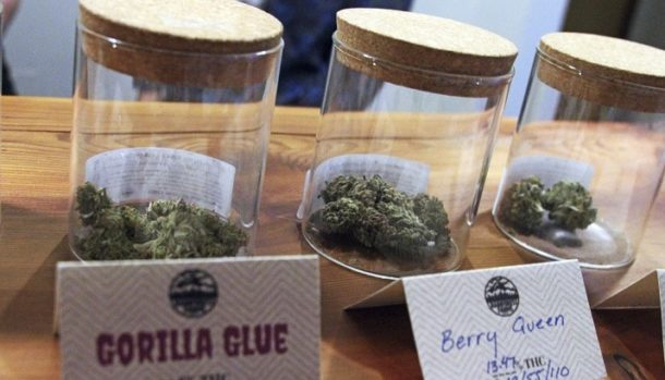 glass jars with cannabis buds in them
