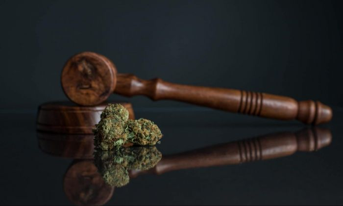 A court gavel with marijuana buds