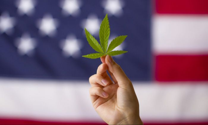 Hand holding up marijuana leaf in front of american flag