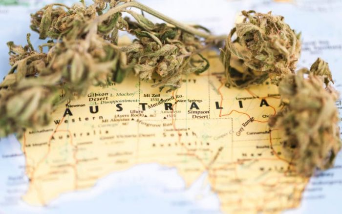 Map of australia featuring cannabis buds