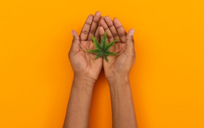 two hands holding out cannabis bud against an orange table