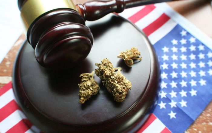 legal gavel, cannabis buds, on top of an American flag