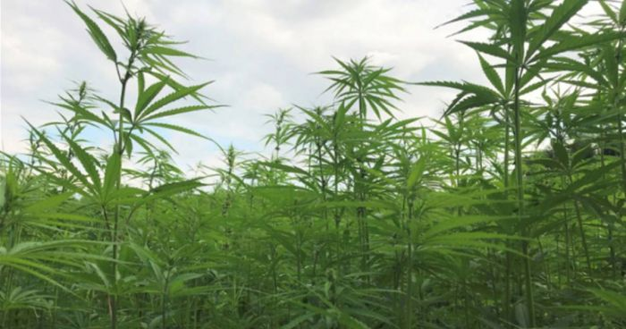 Grants For Promoting Pennsylvania Hemp Products