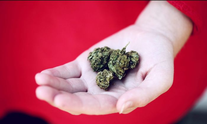 hand holding out cannabis buds against a red background
