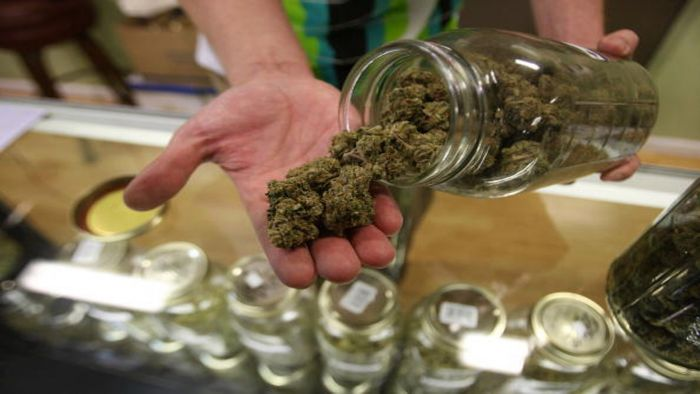 a bud tender holding out cannabis from a jar
