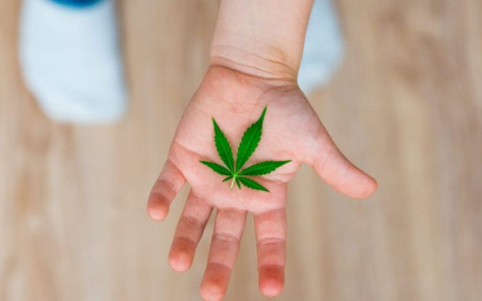 small child's hand holding out marijuana leaf