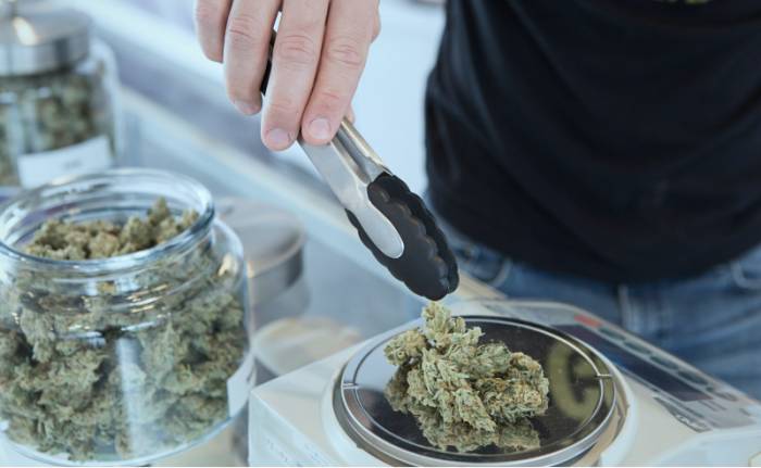 man picking up cannabis buds from a jar