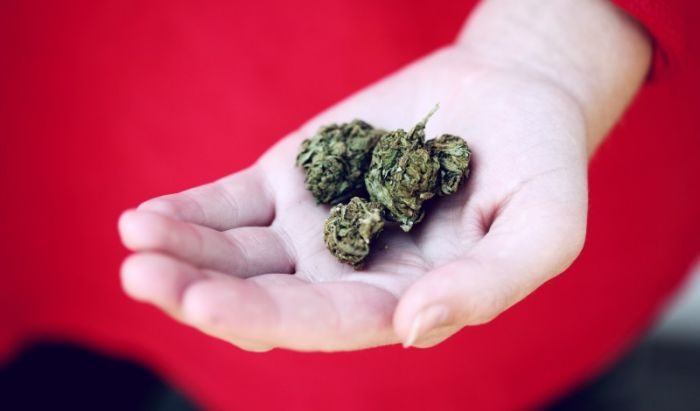 hand offering out cannabis buds