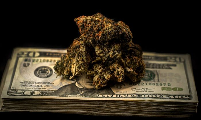 marijuana buds on bills