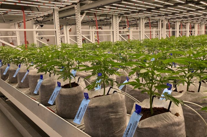 inside the Cresco labs growing facility