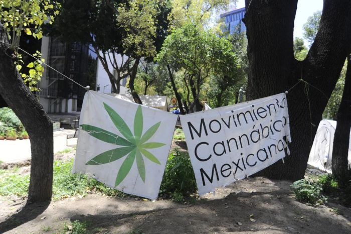 protestors holding signs with marijuana leaves painted on them