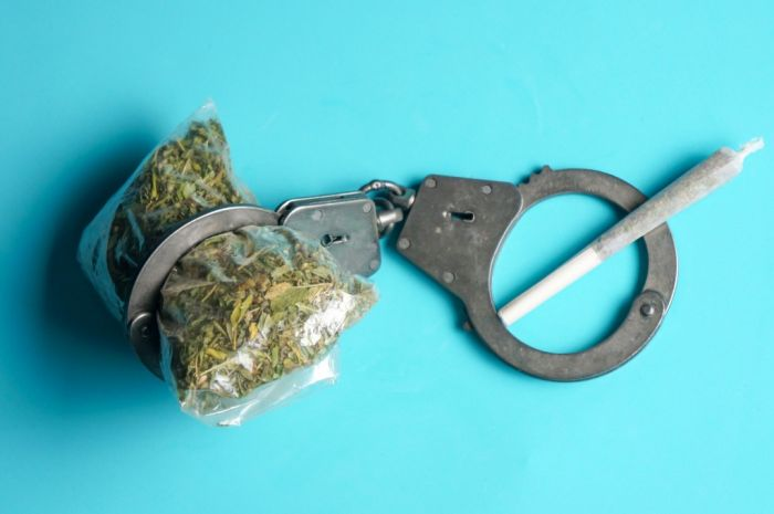 blue background, with cannabis buds