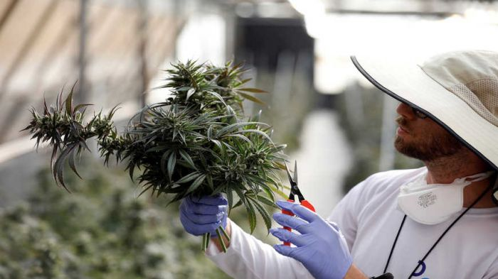 Will Israel fully legalize use of cannabis?
