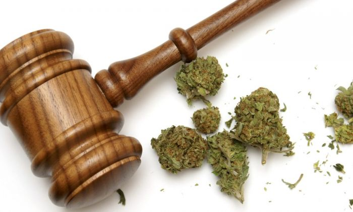 legal gavel with cannabis buds next to it