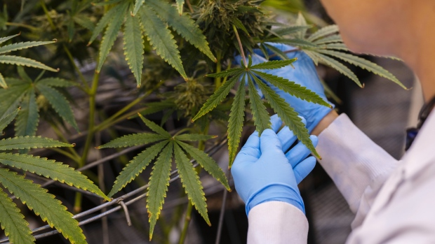 Cannabis Is America's Fastest-Growing Sector, Adding 33,700 Jobs Last Year