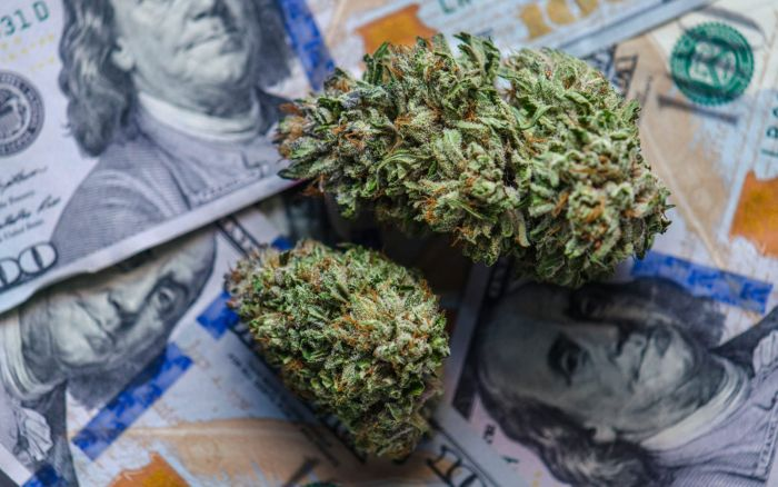 stack of money with cannabis buds