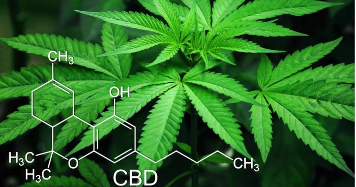 Study: Consumer Perceptions And Use Of CBD And THC