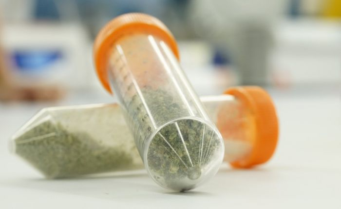 cannabis in medical containers