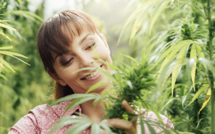 woman walking amongst field of marijuana