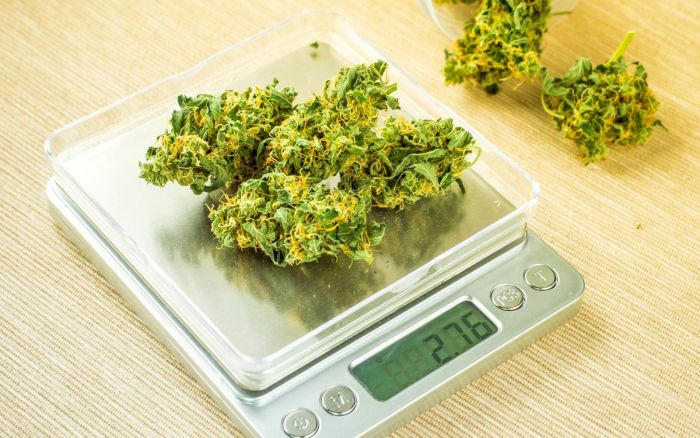 a small scale with cannabis buds being weighed