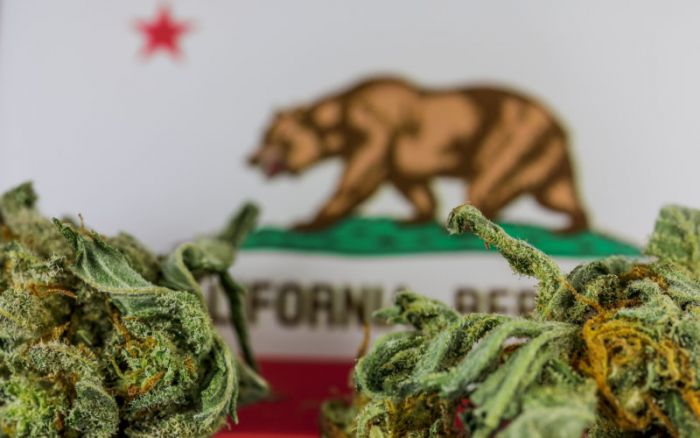 california flag with weed buds in front