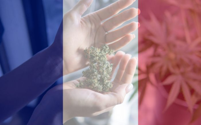 faded French flag in front of hand holding cannabis