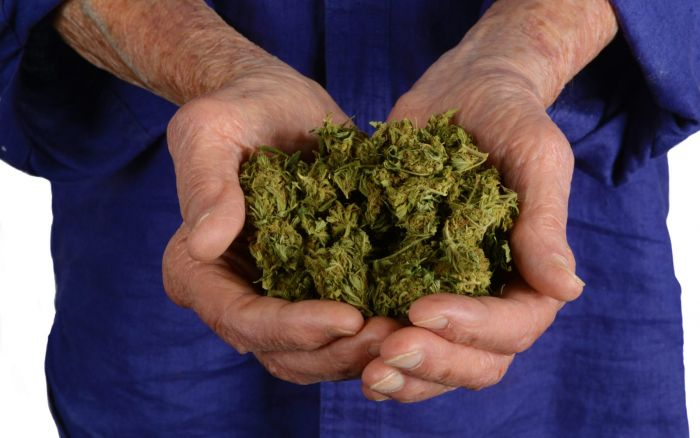 hands holding together cannabis buds
