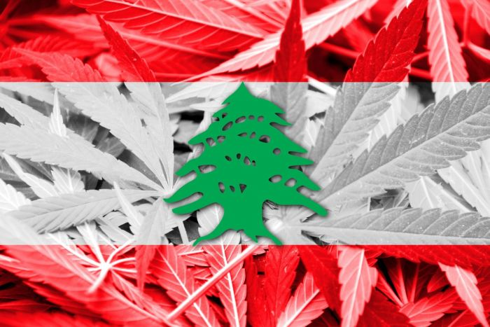 Lebanon Legalized Medical Cannabis, 1st in Arab World