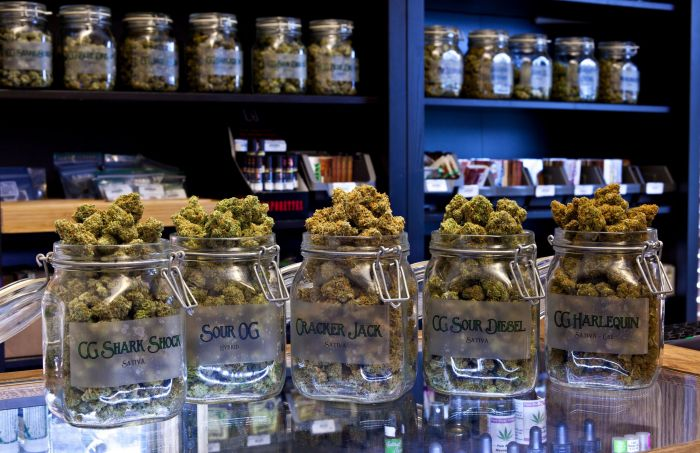 glass jars filled with cannabis along a display shelf