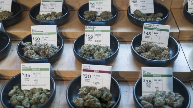 display of multiple strains of cannabis