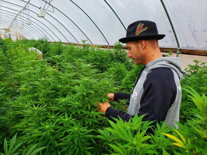 2 Marijuana Stocks With the Most Cash in 2020